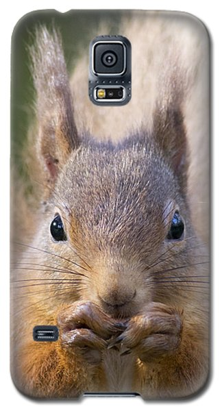 Red Squirrel - Scottish Highlands #28 Galaxy S5 Case