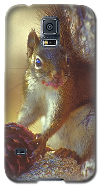 Red Squirrel With Pine Cone Galaxy S5 Case