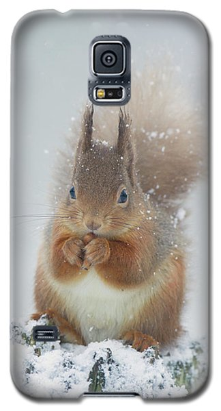 Red Squirrel With Snowflakes Galaxy S5 Case