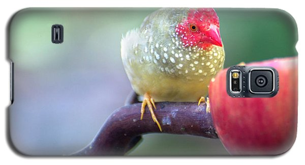 Red Star Finch Galaxy S5 Case