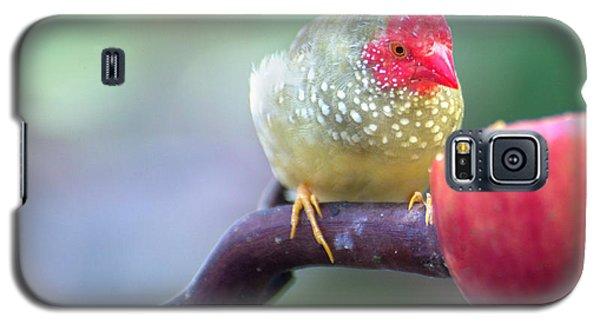 Red Star Finch Galaxy S5 Case