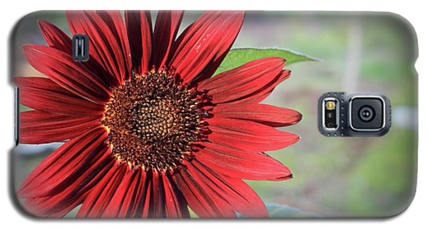 Red Sunflower Galaxy S5 Case