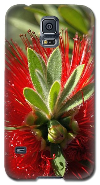 Red Surprise Galaxy S5 Case