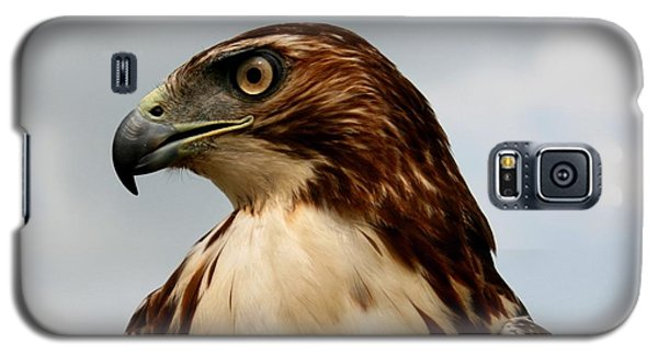 Red Tail Hawk 1 Galaxy S5 Case by David Dunham