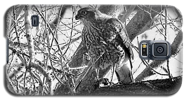 Red Tail Hawk In Black And White Galaxy S5 Case