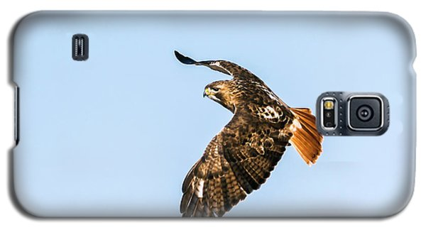 Red-tail Hawk In Flight Galaxy S5 Case