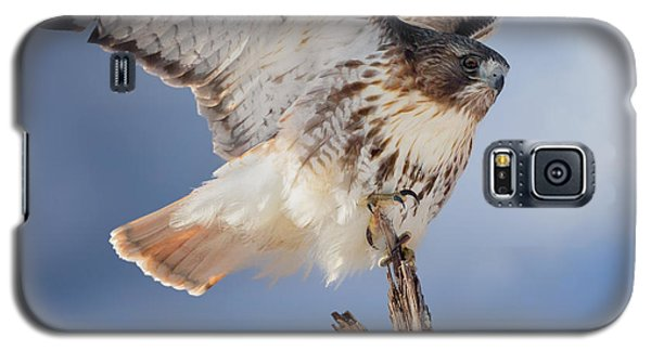 Galaxy S5 Case featuring the photograph Red Tail Hawk Perch by Bill Wakeley