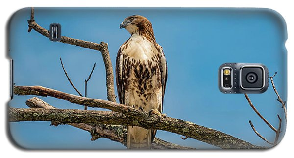 Red Tail Hawk Perched Galaxy S5 Case