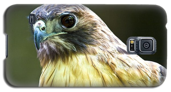 Red Tail Hawk Galaxy S5 Case