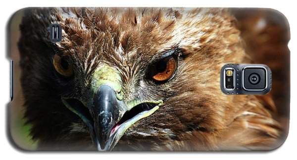 Galaxy S5 Case featuring the photograph Red-tail Hawk Portrait by Anthony Jones