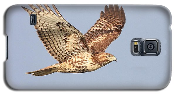Red Tailed Hawk 20100101-1 Galaxy S5 Case