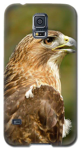 Galaxy S5 Case featuring the photograph Red-tailed Hawk Close-up by Ann Bridges