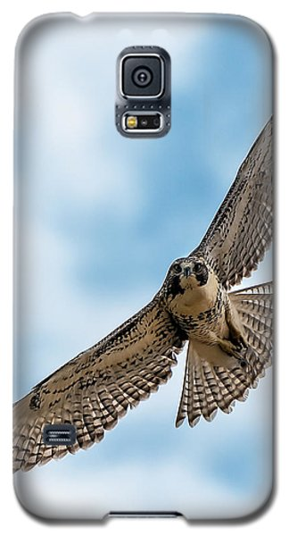 Red-tailed Hawk Coming At Me Galaxy S5 Case