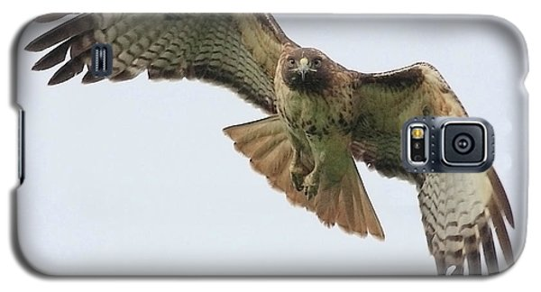 Red Tailed Hawk Finds Its Prey Galaxy S5 Case