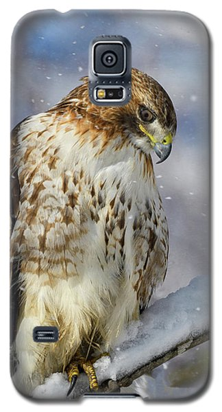 Red Tailed Hawk, Glamour Pose Galaxy S5 Case
