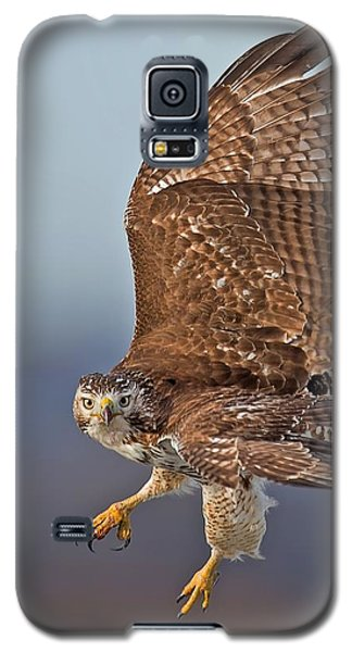 Red-tailed Hawk In Flight Galaxy S5 Case by CR  Courson