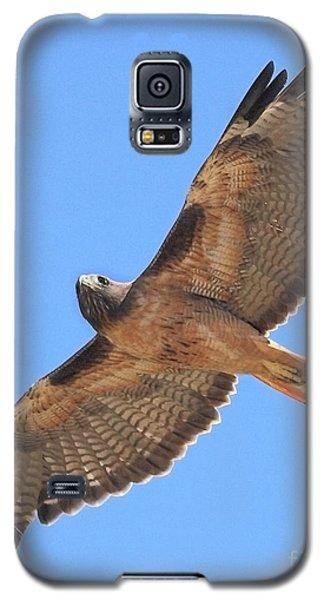 Red Tailed Hawk In Flight Galaxy S5 Case