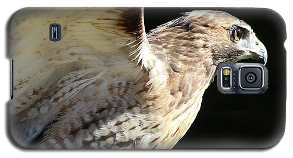 Red-tailed Hawk In Profile Galaxy S5 Case