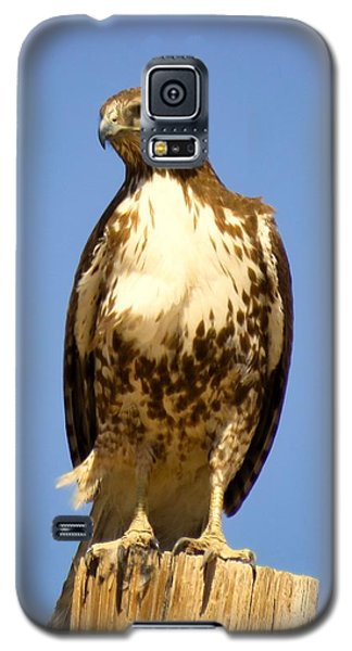 Red-tailed Hawk On Post Galaxy S5 Case