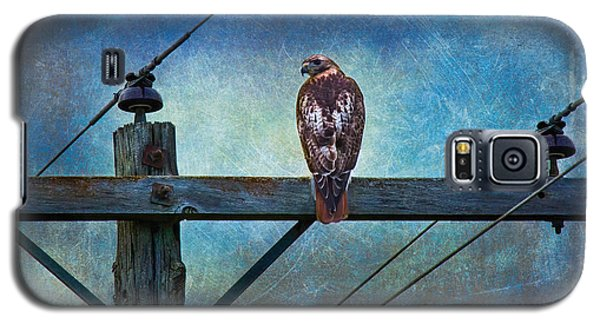 Red-tailed Hawk On Power Pole Galaxy S5 Case