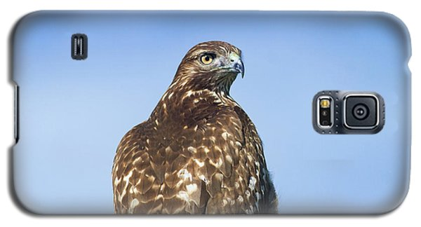 Red-tailed Hawk Perched Looking Back Over Shoulder Galaxy S5 Case
