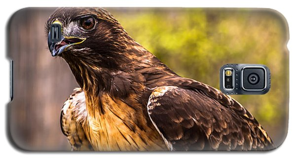 Red Tailed Hawk Profile 2 Galaxy S5 Case