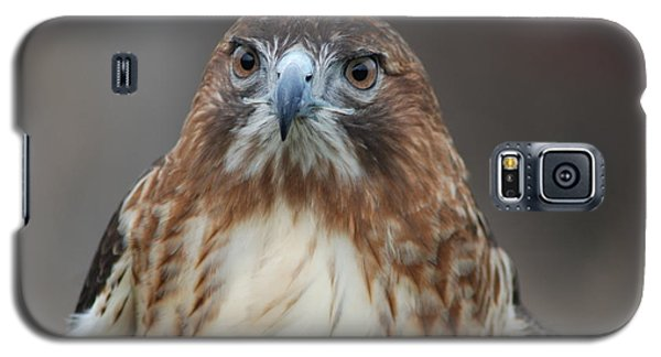 Galaxy S5 Case featuring the photograph Red Tailed Hawk by Richard Bryce and Family