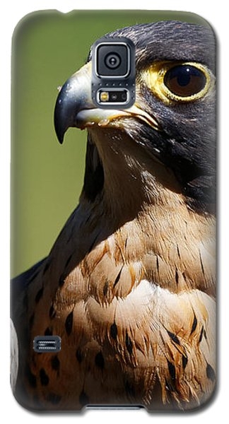 Peregrine Falcon Galaxy S5 Case