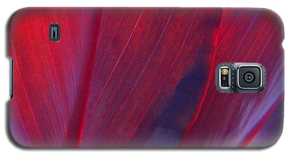 Red Ti Leaves At Last Light Galaxy S5 Case by Kerri Ligatich