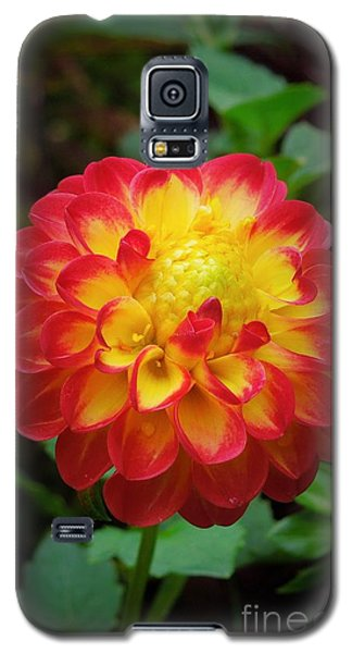 Red Tipped Petals Galaxy S5 Case