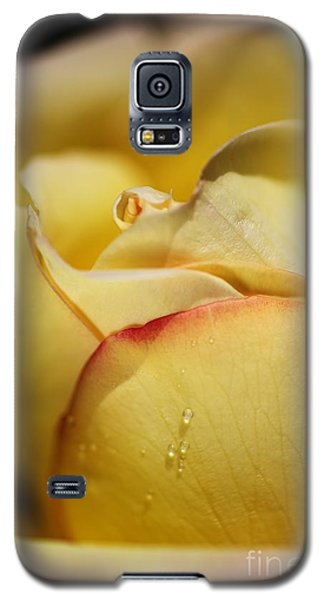 Red Tipped Yellow Rose Galaxy S5 Case
