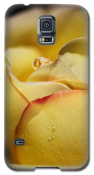 Red Tipped Yellow Rose Galaxy S5 Case by Joy Watson