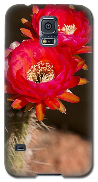 Galaxy S5 Case featuring the photograph Red Tops by Laura Pratt