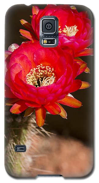 Red Tops Galaxy S5 Case