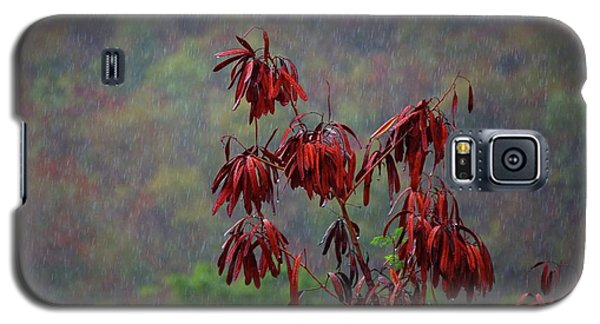Red Tree In The Rain Galaxy S5 Case by Michael Thomas