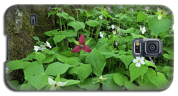 Red Trillium At Center Galaxy S5 Case by Alan Lenk