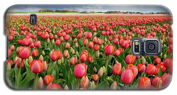 Red Tulip Field Galaxy S5 Case