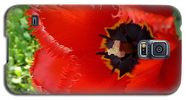 Galaxy S5 Case featuring the photograph Red Tulip by Jean Bernard Roussilhe