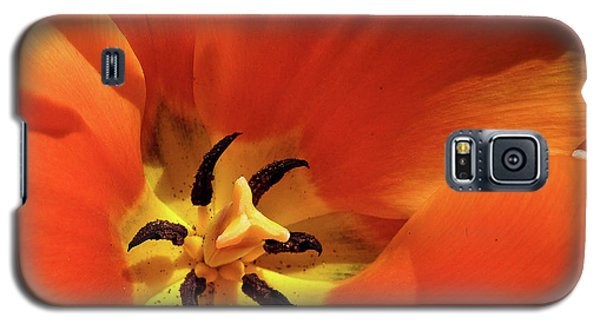 Galaxy S5 Case featuring the photograph Red Tulip by Susan Cole Kelly