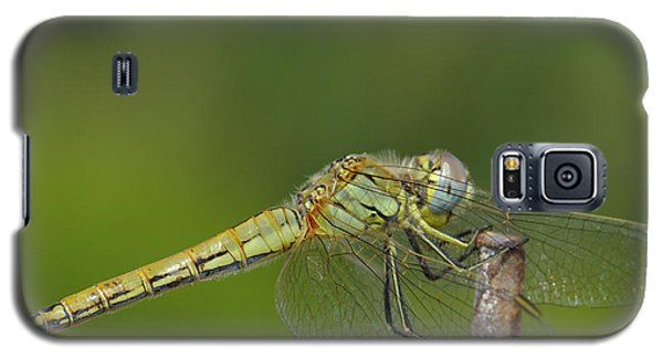 Red-veined Darter Dragonfly Galaxy S5 Case