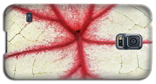 Red Veins Of A Coleus Plant Galaxy S5 Case