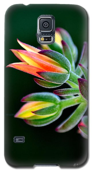 Red Velvet Galaxy S5 Case