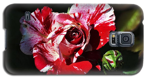 Red Verigated Rose Galaxy S5 Case