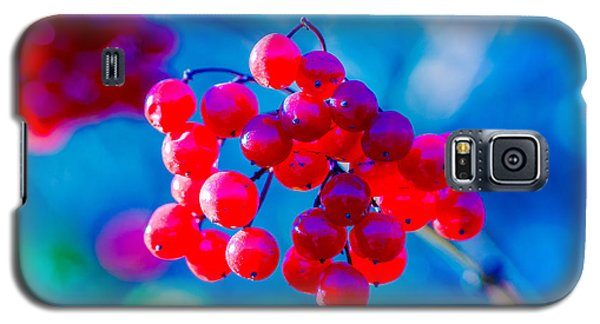 Galaxy S5 Case featuring the photograph Red Viburnum Berries by Alexander Senin