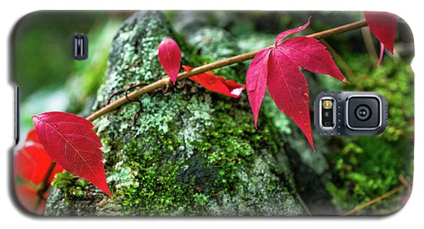 Galaxy S5 Case featuring the photograph Red Vine by Bill Pevlor