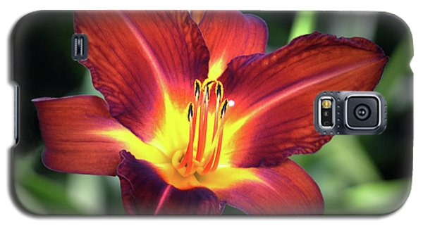 Galaxy S5 Case featuring the photograph Red Volunteer. by Terence Davis