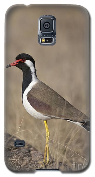 Red-wattled Lapwing Galaxy S5 Case