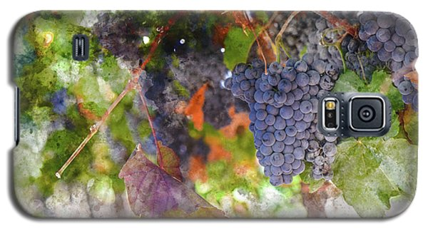 Red Wine Grapes On The Vine In Wine Country Galaxy S5 Case