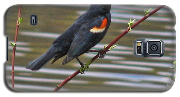 Red Wing Black Bird Galaxy S5 Case by Debra     Vatalaro