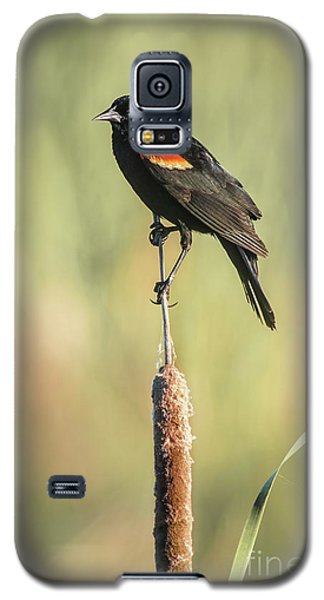 Galaxy S5 Case featuring the photograph Red-wing On Cattail by Robert Frederick